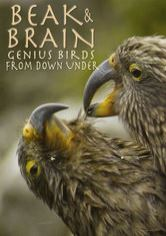Beak & Brain: Genius Birds From Down Under